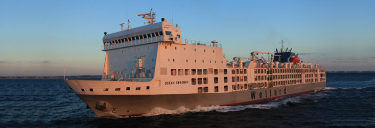 mv ocean swagman cattle export