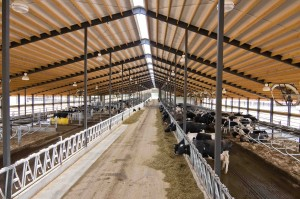 Ventilation Methods in Free Stall Barns and Shelter Sheds